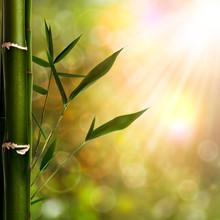 Milieux orientaux abstraites avec du bambou feuillage