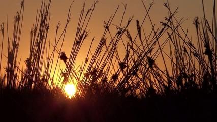 sundown poetry