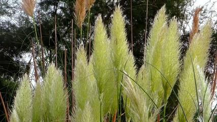 marsh reeds