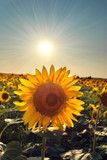 Fototapeta piękny - kwiat - Kwiat