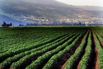 Travel Photos of Israel - Galilee
