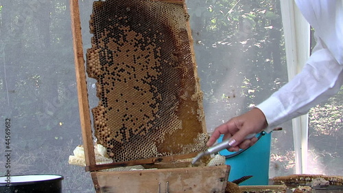 Beekeeper preparing the frame for extraction of honey