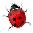 Ladybird isolated on white background. Vector illustration.