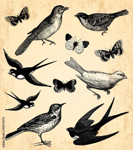 Fotobehang Vlinders in Grunge Oiseaux et papillons