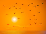 Flying birds against orange sunset.