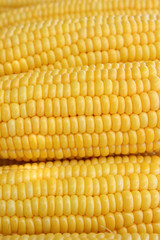 Grains of yellow ripe corn as background