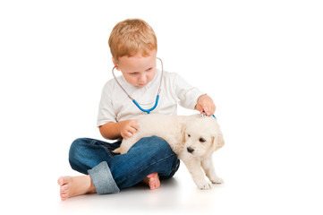 The boy listens to retriever puppy through a stethoscope