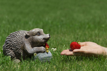 Strawberries for hedgehog
