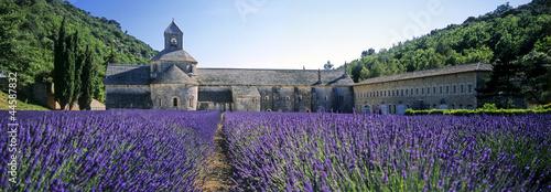 abbaye de senanque - 44587832
