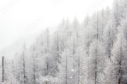 forest in snow - 44589422