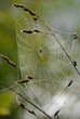 August month spider web