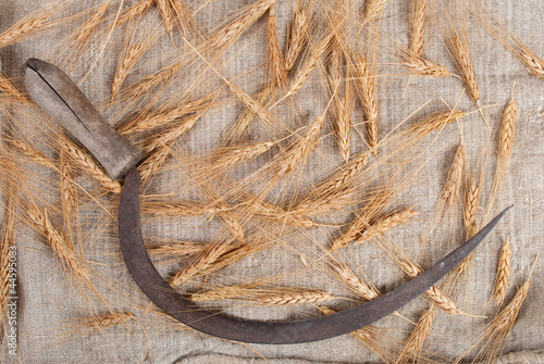 Sickle and ears of wheat