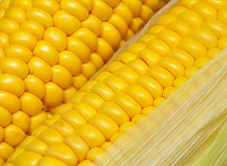 corn comb background