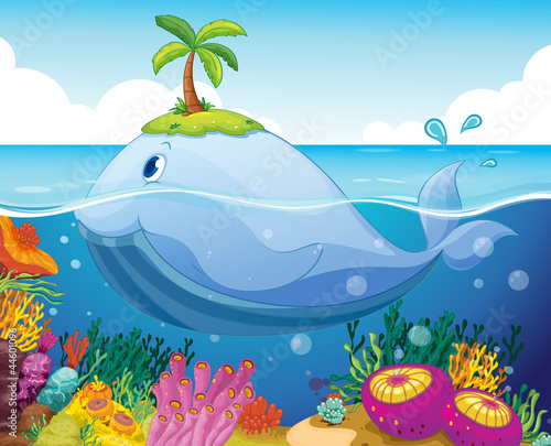Foto op Plexiglas Onderzeeer fish, island and coral in the sea
