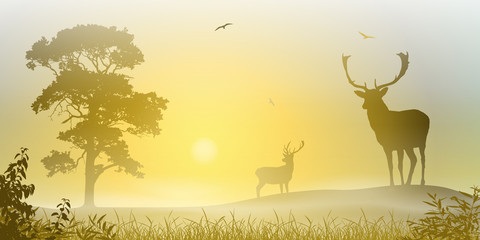 Male Stag Deer on a Misty Meadow with Sunset, Sunrise