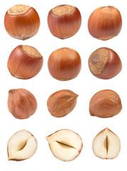 Large set of Hazelnut