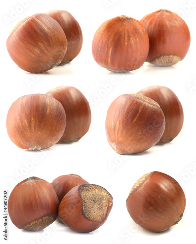 Large set of Hazelnut