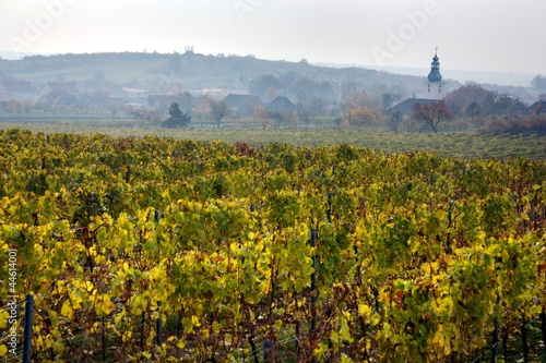 church in autumnal vineyard