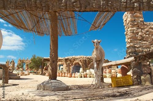 Staande foto Tunesië bazar chameau