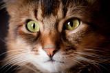 Fototapete Zuhause - Rot - Haustiere