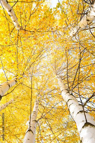 jesieni-drzewa-z-yellowing-liscmi-przeciw-niebu