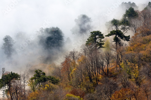foggy forest in mountains - 44619435