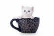 small silver british kitten in black cup on white background
