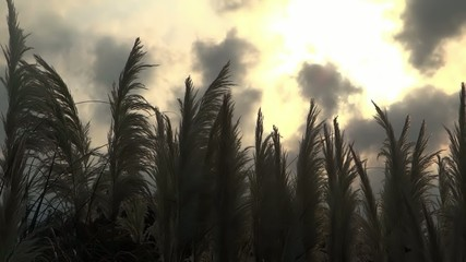 sundown in the marshlands