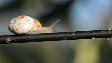 snail passing by time lapse