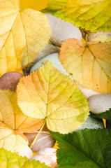 Yellow and green fallen down leaves, background