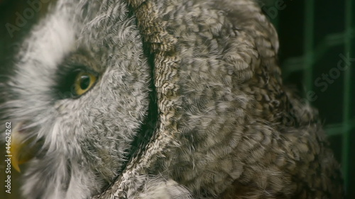 HD - Eagle-owl