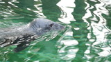 HD - Grey Seal_scene 2