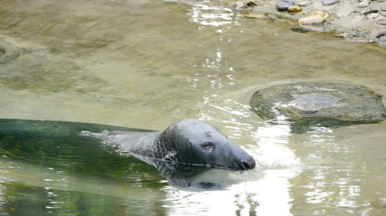 HD - Grey Seal_scene 1