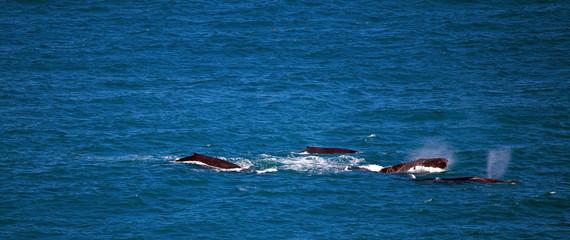 Balene a Kalbarri, Australia