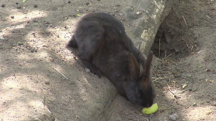 A rabbit eating