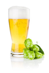 Glass of fresh beer with Green hops isolated on a white backgrou