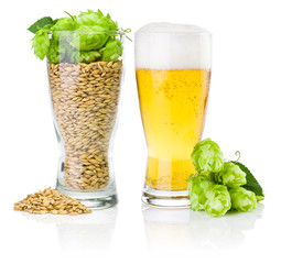 Glass of fresh beer and cup full of barley and hops isolated on