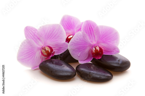 canvas print picture Massage Stones with Orchid