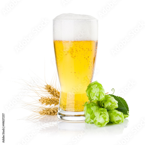 Glass of fresh beer with Green hops and ears of barley isolated