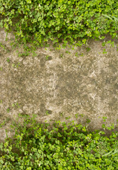Wood sorrel on concrete floor as frame on top and bottom