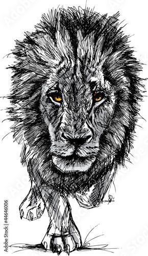 skizze-eines-grosen-mannlichen-afrikanischen-lowen