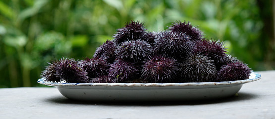 Sea ​​urchins 02