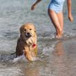 Elo-Welpe und Kind spielen im Meer