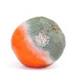 canvas print picture - moldy orange