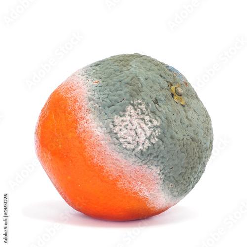 canvas print picture moldy orange