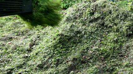 Gras auf Kompost