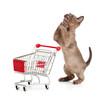 Admiring kitten or cat with shopping cart