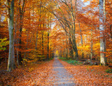 Fototapety Pathway in the autumn forest