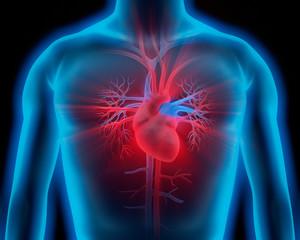 Oberkörper mit Herz