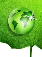 vegetal world